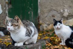 Several cats gathered on the steps of the old building stock photos