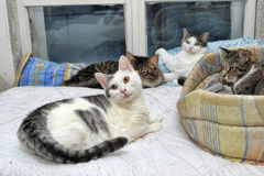 Several cats lie together. Many cats together indoors shelter Stock Images