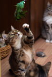 Several cats shelter catches plays Royalty Free Stock Images