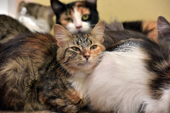 Several cats sleeping together Stock Photography
