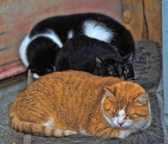 Several cats sleeping together Stock Image
