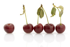 Several cherries, isolated Stock Images