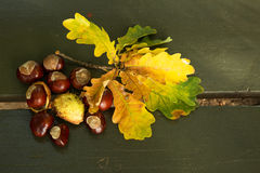 Several chestnuts and leaves on a park bench.Horizontal. Stock Images