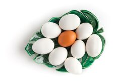 Several Chicken Eggs Lie On A Ceramic Plate Stock Photography