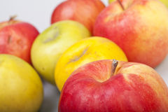 Colorful apples. Several colorful apples on a white background royalty free stock photo