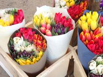 Several colorful beautiful forest tulips. Multiple forest tulips in plastic box outside on a market Stock Images
