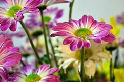 Some colorful flowers in the garden. Several colorful flowers in the garden royalty free stock images