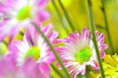 Some colorful flowers in the garden. Several colorful flowers in the garden stock photos
