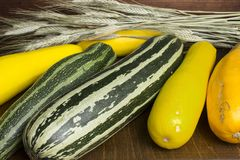 Several colorful zucchini and ears Royalty Free Stock Photo
