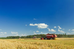 Several combine harvesters working on oats farm field under blue sky during hot summer day Stock Photography