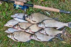 Several common bream fish, crucian fish, roach fish, bleak fish Stock Photos