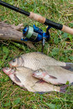 Several common bream fish, crucian fish, roach fish, bleak fish Royalty Free Stock Photography