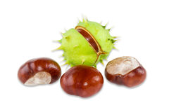 Several conkers on a light background stock photo