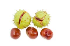Several conkers on a light background royalty free stock photography