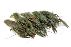 Several crayfish Stock Images