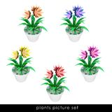 Several cropped houseplant in flowerpot pack Royalty Free Stock Photos