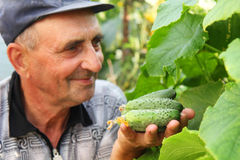 Several cucumber in a hand Royalty Free Stock Photo