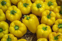Several Delicious Yellow Peppers Close Up.  stock images
