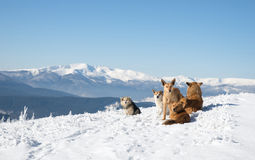 Several dogs sitting on mountain landscape background Royalty Free Stock Photos