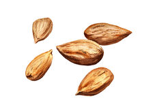Several dried almonds Stock Photography
