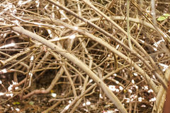 Several dry branches Royalty Free Stock Photography