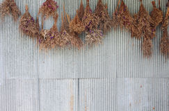 Several of dry flowers hanging on the zinc wall background Royalty Free Stock Photography