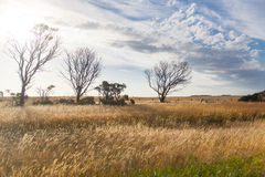 Several dry trees in a grass field Stock Photo
