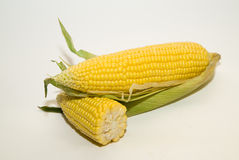 Several ears of corn on over white Royalty Free Stock Images