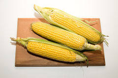 Several ears of corn on over white Royalty Free Stock Image