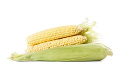 Several ears of corn on a white background. Some fresh corn cobs on a white background, photographed in the studio Royalty Free Stock Photos