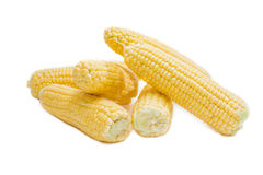 Several ears of young corn on a light background closeup Stock Photos