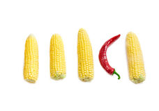 Several ears of young corn and red chili pepper closeup Royalty Free Stock Image