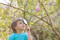 Several Easter colored eggs hanging on a tree branch color sunny spring day. Stock Photography