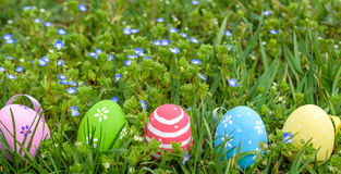 Several Easter colored eggs hanging on a tree branch color sunny spring day. Royalty Free Stock Image