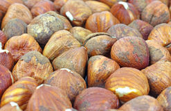 Several filbert nuts. A close view of several small filbert nuts Royalty Free Stock Photo