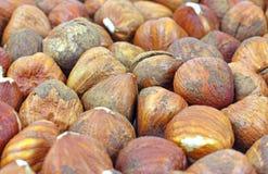 Several filbert nuts Royalty Free Stock Photo