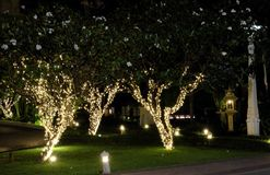 Several flowering trees, decorated with decorative lights. White flowers. Night scene.  royalty free stock photos