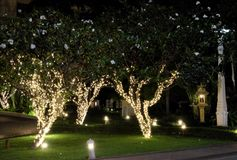 Several flowering trees, decorated with decorative lights. White flowers. Night scene.  stock photos