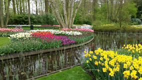 Several flowers around a pond in Keukenhof Royalty Free Stock Images