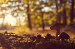 Several forest mushrooms against blurred colorful trees. stock images