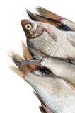 Several fresh freshwater fish Stock Image