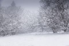 Frost covered trees on a misty day Stock Photography