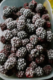 Several frozen blackberries in plastic box on kitchen. Close-up of several frozen blackberries with different shades of red Stock Photos