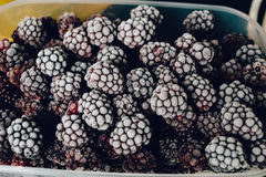 Several frozen blackberries in plastic box on kitchen top view. Close-up of several frozen blackberries with different shades of red Royalty Free Stock Photos