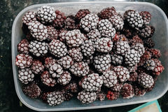 Several frozen blackberries in plastic box on kitchen top view. Close-up of several frozen blackberries with different shades of red Stock Photos