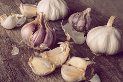 Several garlic bulbs Stock Photo
