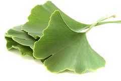 Several ginkgo biloba leaves on white background Stock Photography