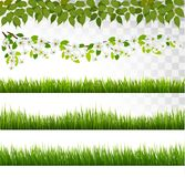 Several grass borders. Vector. Stock Images