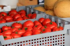 Several gray plastic crates, filled with just picked tomatoes and melons Stock Photography