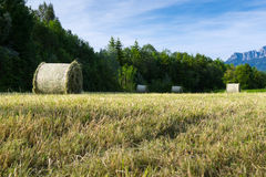 Several hay bale at fresh mowed meadow Royalty Free Stock Image